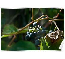 Vineyard Chateau Cooper's Marsh Poster