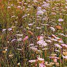 memories of meadows by Leeanne Middleton