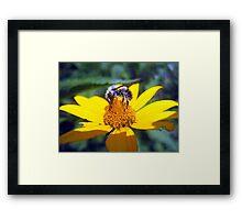 the pollen-nator  Framed Print