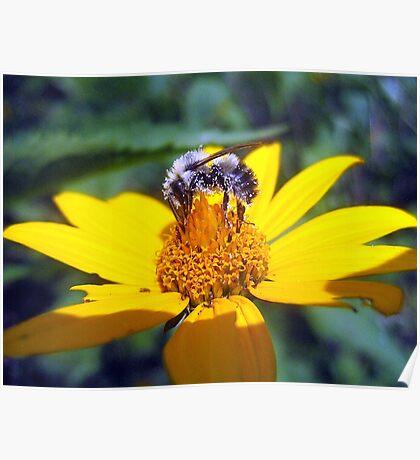 the pollen-nator  Poster