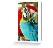 Macaws at Jungle Gardens XVIII Greeting Card