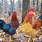 Ozark Wild Chickens RIP by NatureGreeting Cards ©ccwri