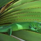 Green Paradise - Iguana on a plant by kotoro
