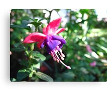 Fun with Fuschias Canvas Print