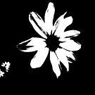 Just a Daisy by Rosalie Scanlon