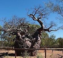 The Boab Prison Tree by myraj