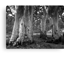 Scary Trees - Mount Brown Station Canvas Print