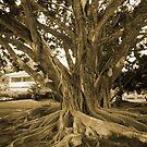 Centenary Tree... by kotoro
