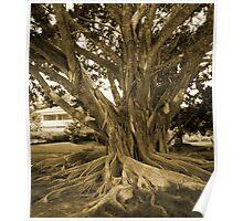 Centenary Tree... Poster