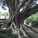 Centenary Tree... 2 by kotoro