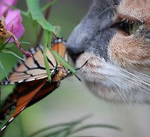 The cat, the butterfly and the preying mantis. by DebbyZiegler