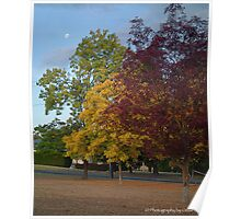 Three colours of autumn Poster