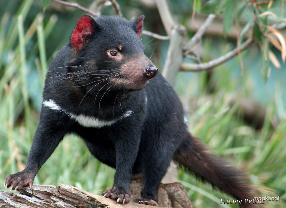 A posing devil by mooksool