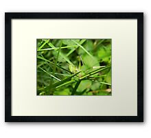 You can't see me! Framed Print