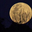 Blue Moon Rising  July 31 by shortshooter-Al