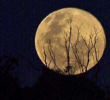 Blue Moon Rising  July 31 by shortshooter-Al