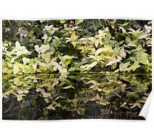 Leafy Reflections Poster