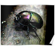 Glossy Pillbug Poster