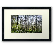 Farnley Woods Framed Print