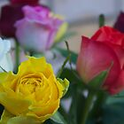 Coloured Roses  by Margaret Stanton