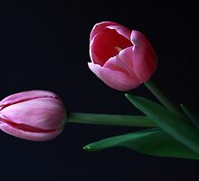 Tulips by Jenni Tanner