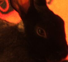 Bedroom Bunny Eyes Sticker