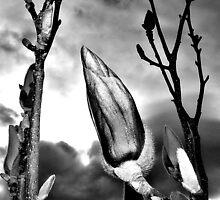 Stark Garden Blossom by Rinaldo Di Battista
