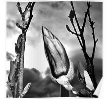 Stark Garden Blossom Poster