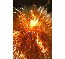 Giant Fluffy Photographic Print