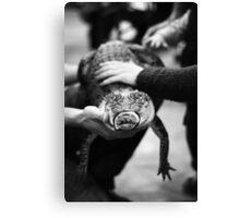 Reptile encounter Canvas Print