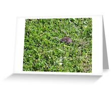 Where's the shrew? Greeting Card