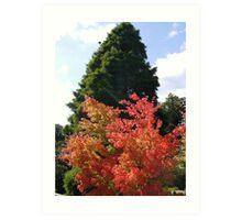 Colours at Wakehurst Place Art Print