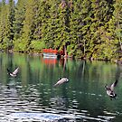 Taking Off Emerald Lake, Canada by alflicc