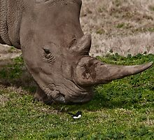 Rhinoceros by Tom Newman