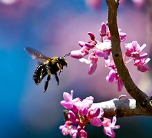 Bee at Magnolia Plantation, SC by imagetj