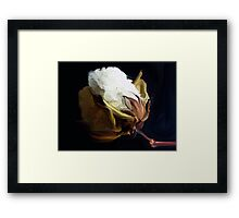 Raw  Cotton Framed Print