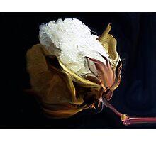 Raw  Cotton Photographic Print