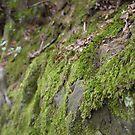 Moss Rock - Wakehurst Place by Emma Smith