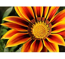Bill's Flower Photographic Print