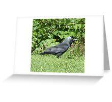 Jackdaw 3 Greeting Card