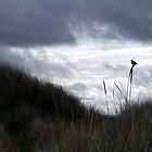 Bird silhouetted against a stormy sky by wombat37