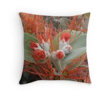 Red Intensity - Australian Native Flower - Fraser Island QLD Throw Pillow