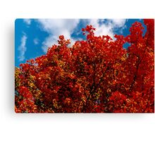 A red view on a fall day (you burn in me) Canvas Print