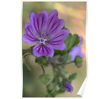 Meadow Crane's-bill Poster
