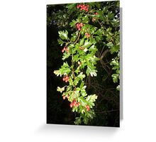 BERRY TREE Greeting Card