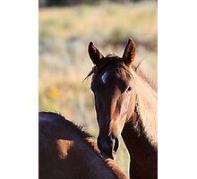 Portrait of a Wild Horse Photographic Print
