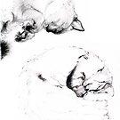 Kitten Studies by Cameron Hampton