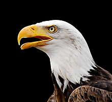 American Eagle by Yamato-Imaging