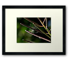 ~ New Beginnings ~ Framed Print