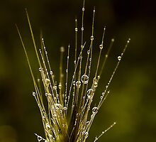 delicate rain by Ingz